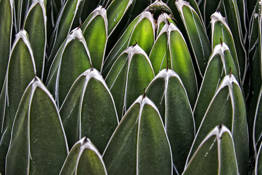 Cactus Photograph - Green Spines by Alice Gipson