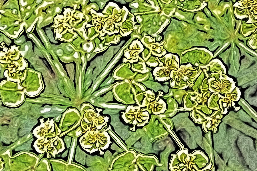 Green Spurge 1 by AJP