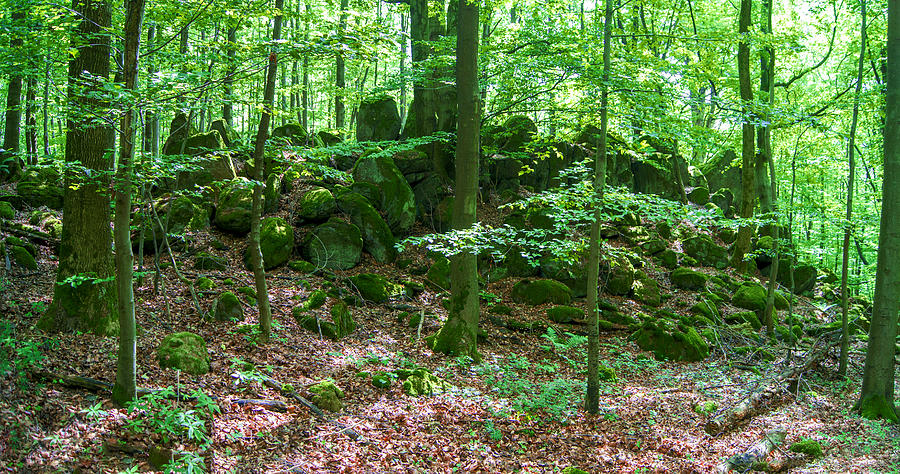 Forest Photograph - Green Stony Forest In Vogelsberg by Sun Travels
