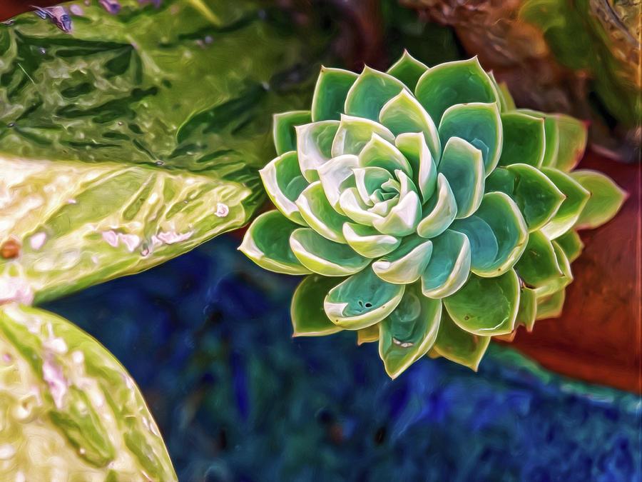 Green Succulent Digital Art by Doctor MEHTA