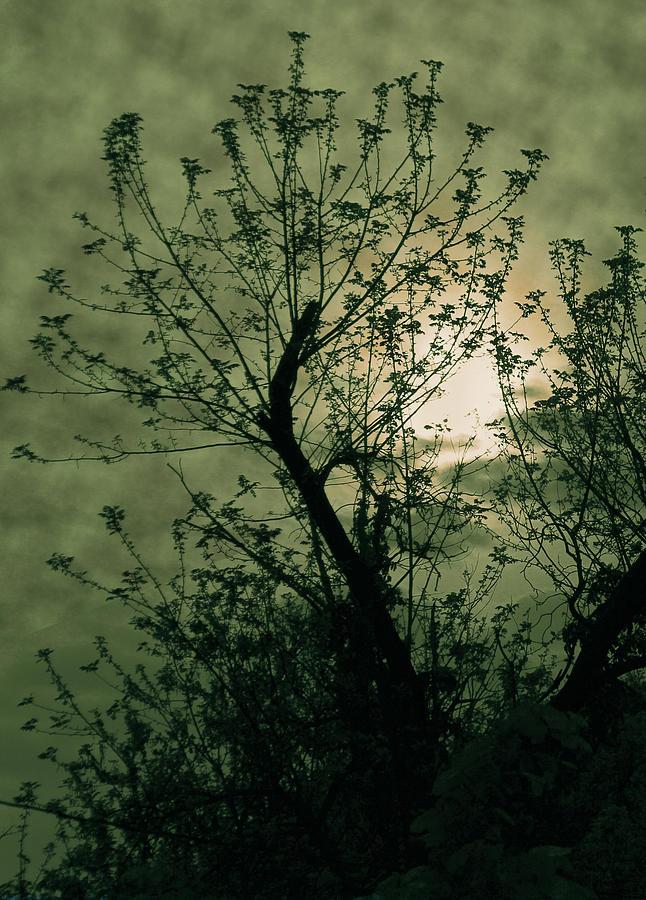 Sunset Photograph - Green Sunset by David Yocum