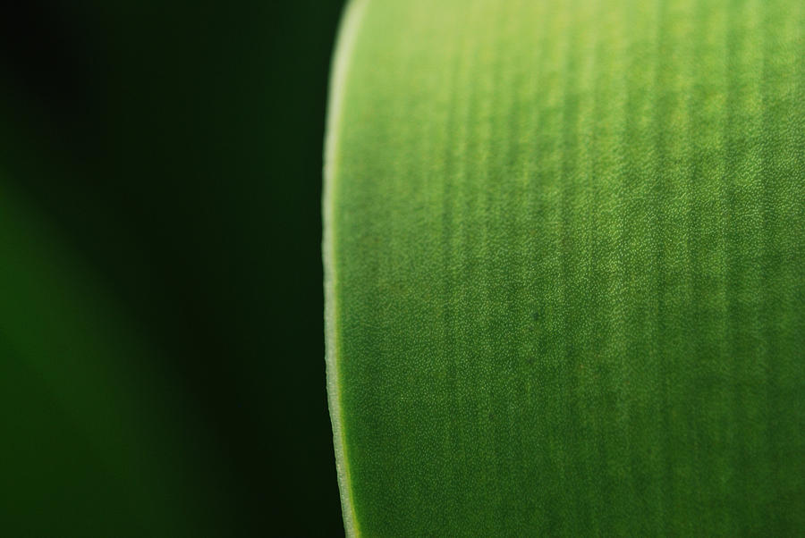 Green Photograph - Green by Susette Lacsina