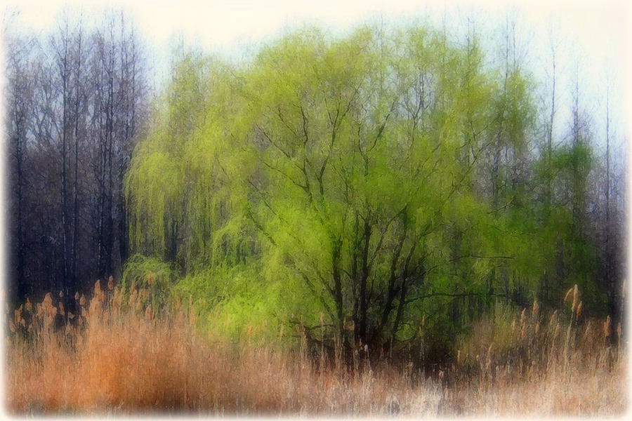 Green Tree Photograph