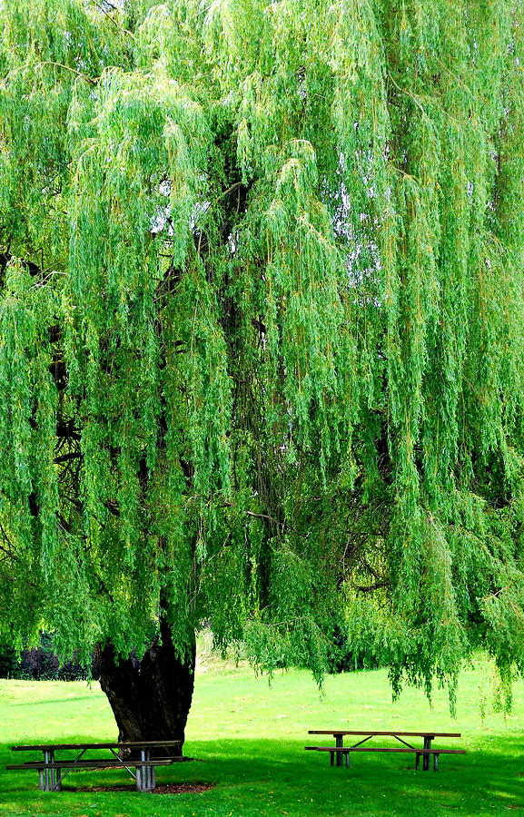Green Tree Photograph - Green Tree View. by Oscar Williams
