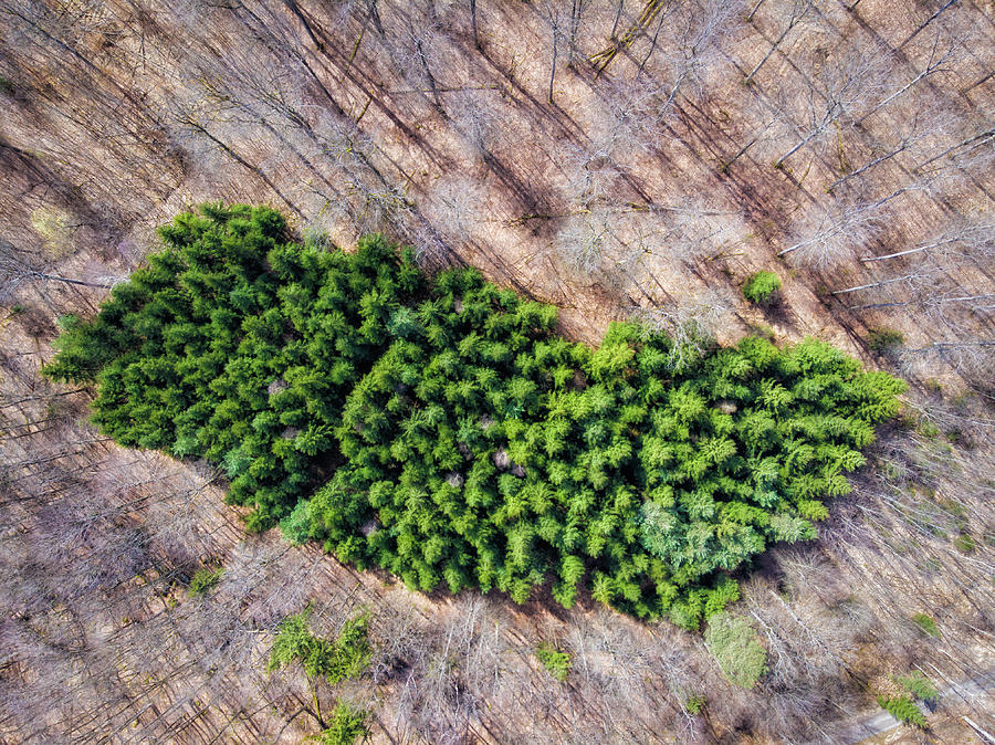 Green Trees Island In Forest Drone Photography Photograph By