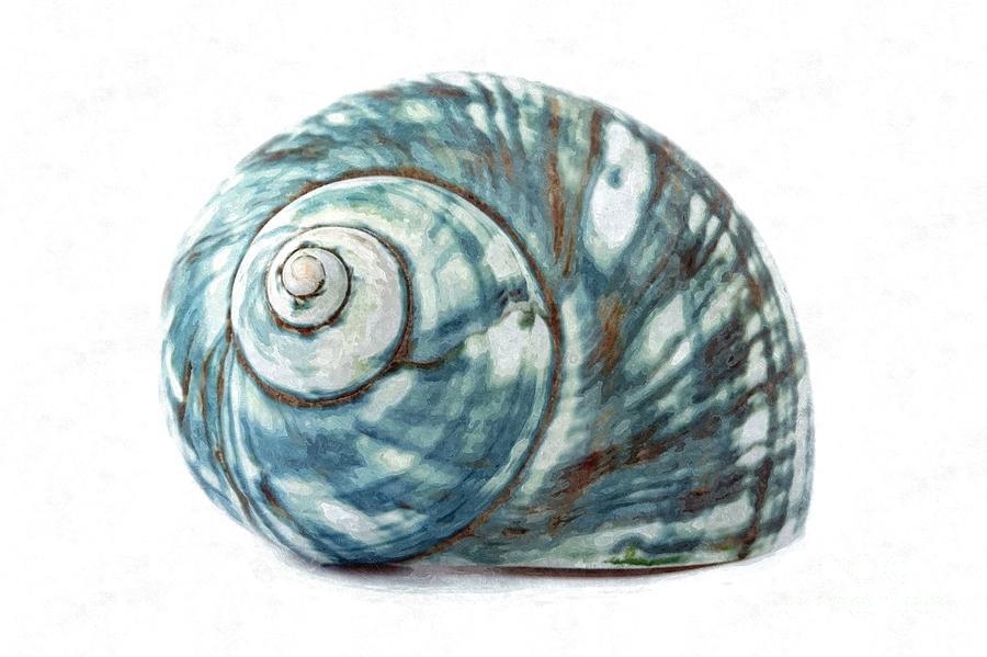Shell Digital Art - Green Turbo by Jennifer Capo