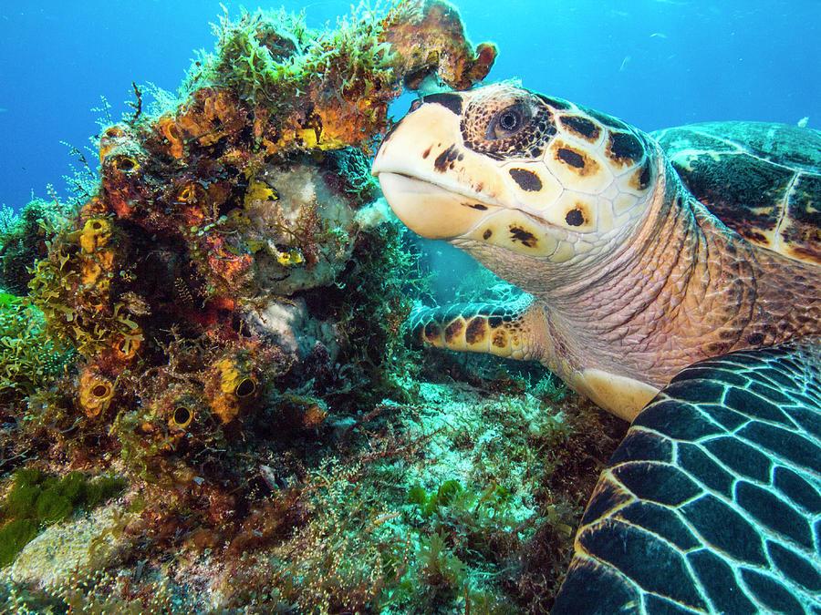 Green Turtle Profile by Matt Swinden