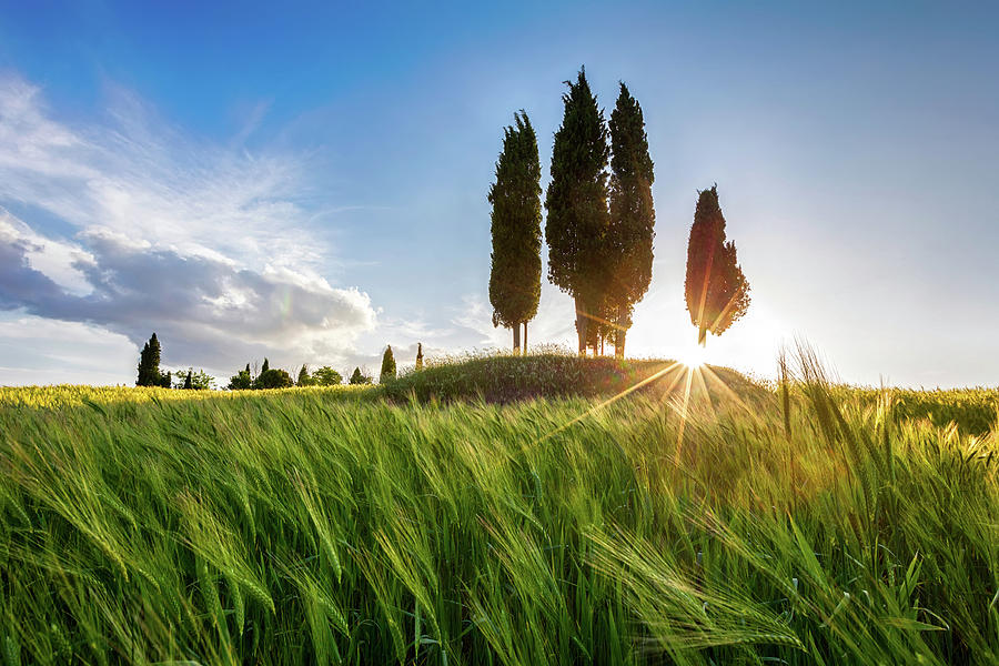 Italy Photograph - Green Tuscany by Evgeni Dinev