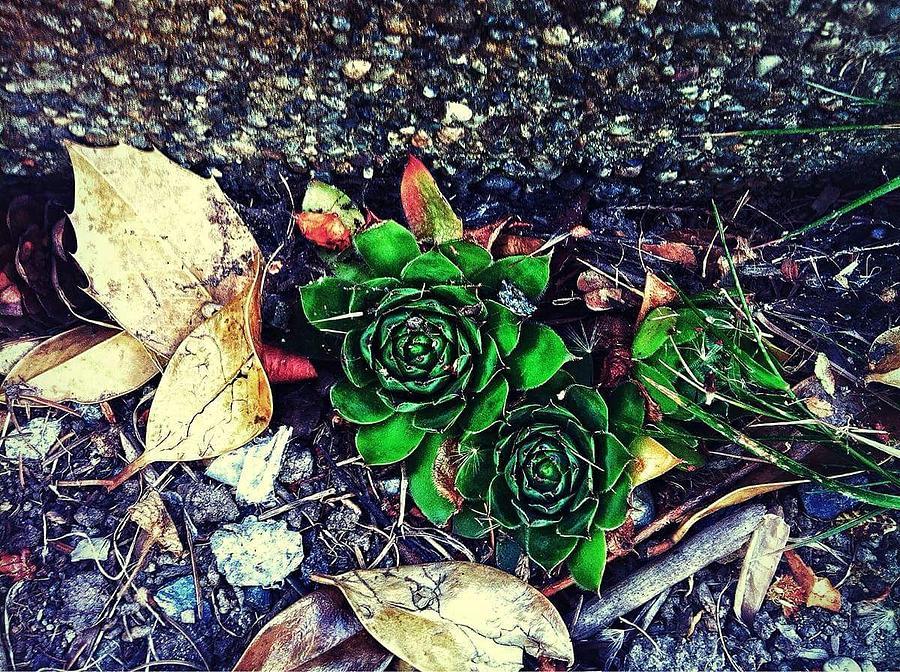 Greener In Between Photograph