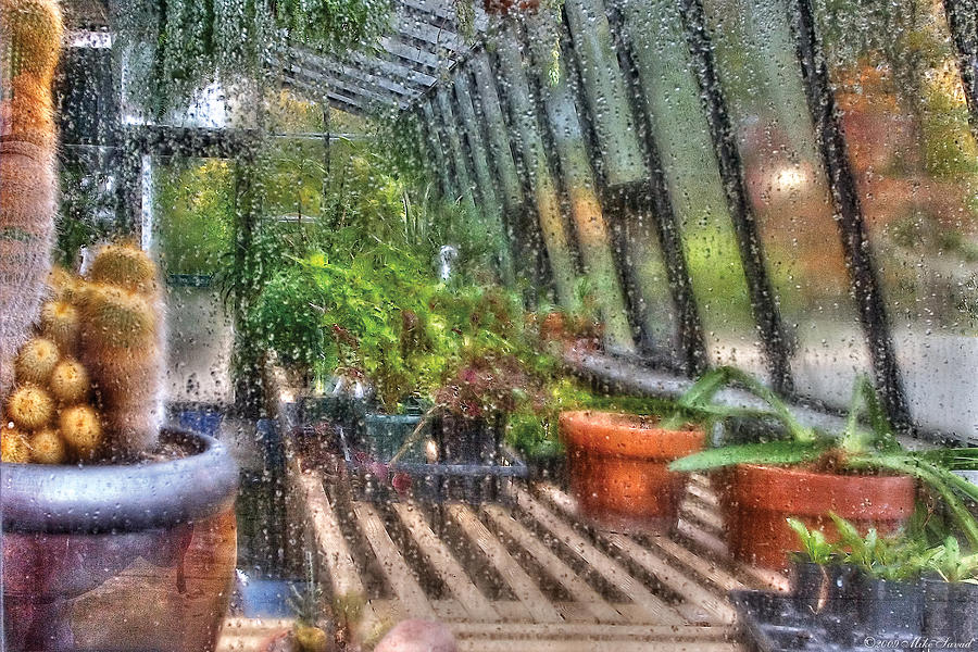 Savad Photograph - Greenhouse - In A Greenhouse Window  by Mike Savad