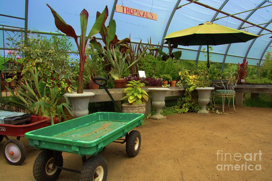 Greenhouse Colors by Tammie Miller