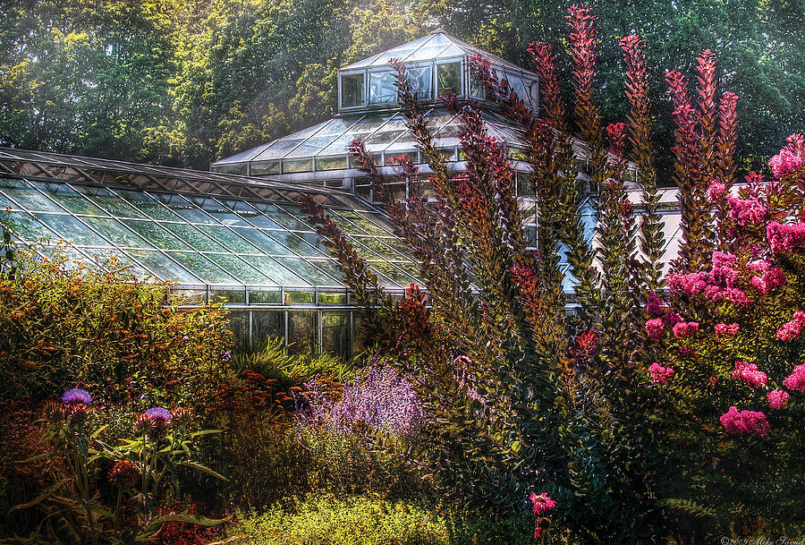 Savad Photograph - Greenhouse - The Greenhouse by Mike Savad