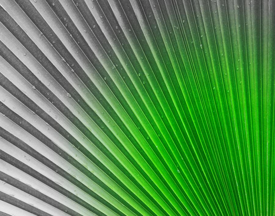 Palm Photograph - Greenish Palm by Gigi Kobel