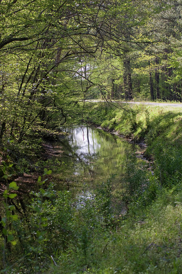 Creek Photograph - Greenway by Alan Raasch