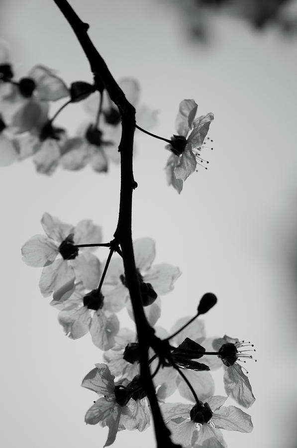 Uw Photograph - Grey by Daniel Lih