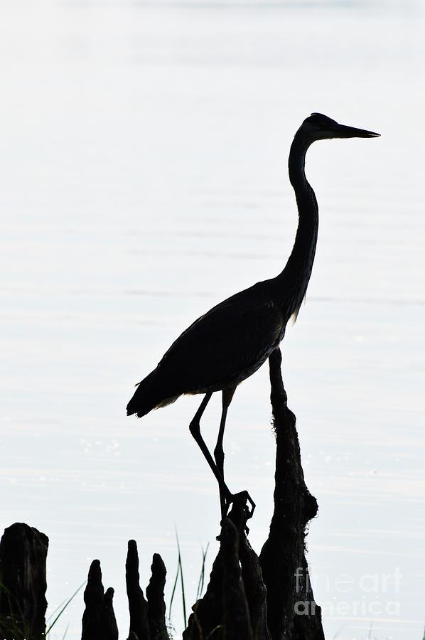grey egret silhouette photograph by viktoriya sorochuk