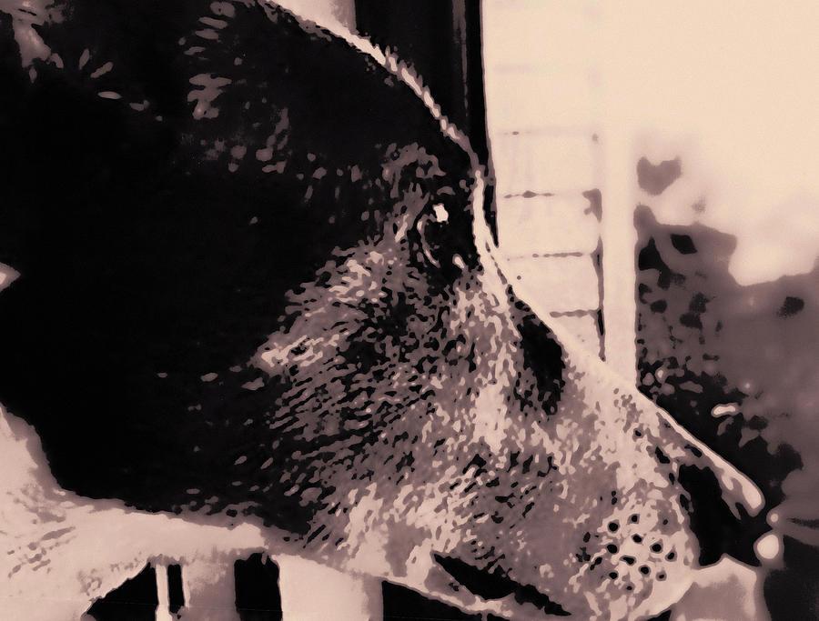 Rescue Greyhound Photograph - Grey Gatsby by Susan Maxwell Schmidt