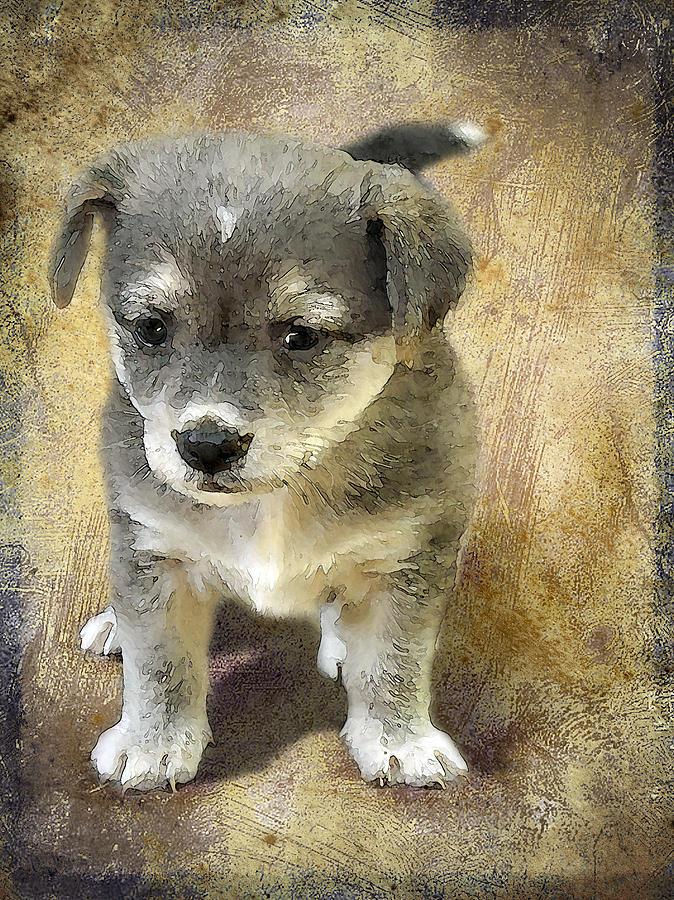 3d Photograph - Grey Puppy by Svetlana Sewell