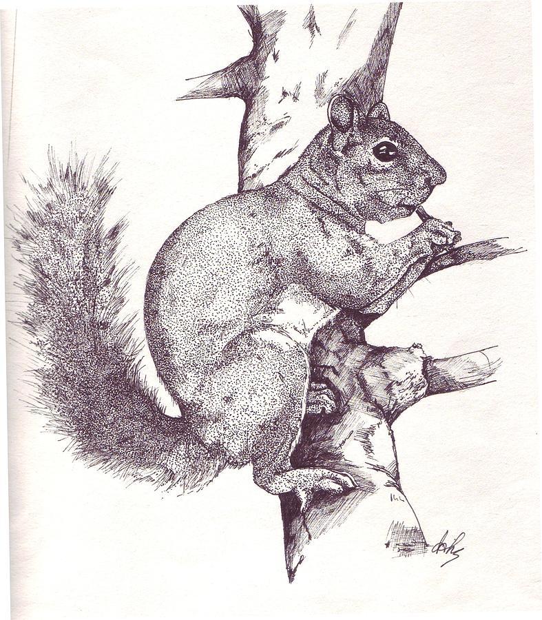 Squirrel Drawing - Grey Squirrel by Debra Sandstrom