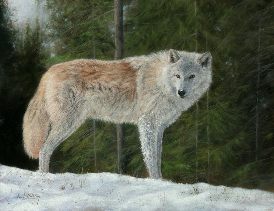 Wolf Painting - Grey Wolf In Snow by David Stribbling