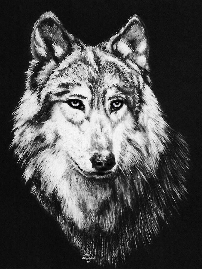 Wolves Pastel - Grey Wolf by Melodye Whitaker
