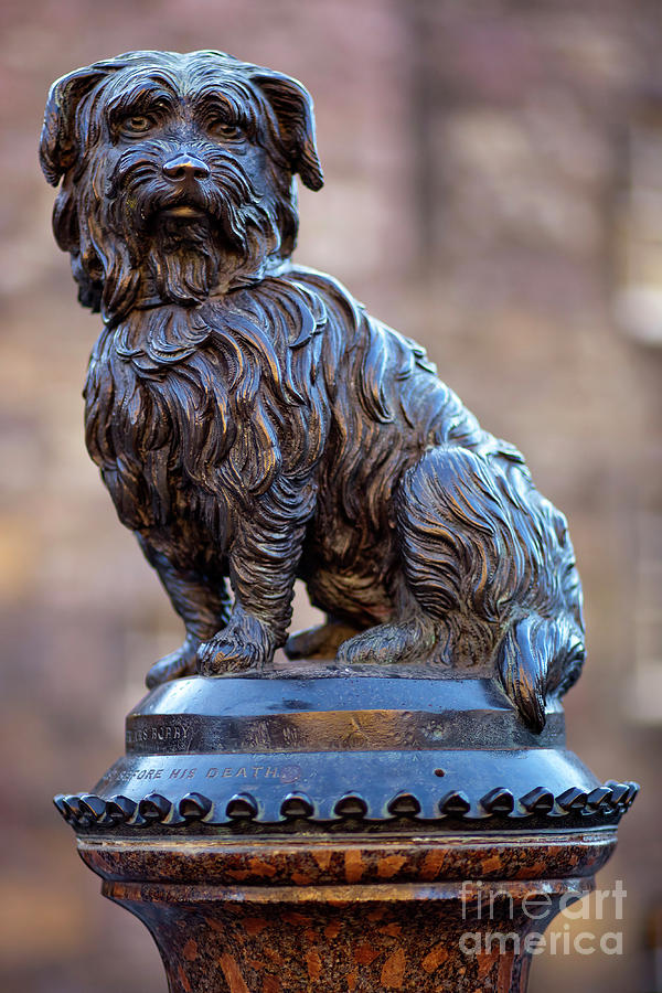 Bobby Photograph - Greyfriars Bobby by Andre Goncalves
