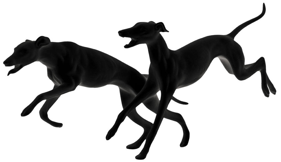 Greyhounds Photograph - Greyhounds Travelling At 45 Mph by Christine Till