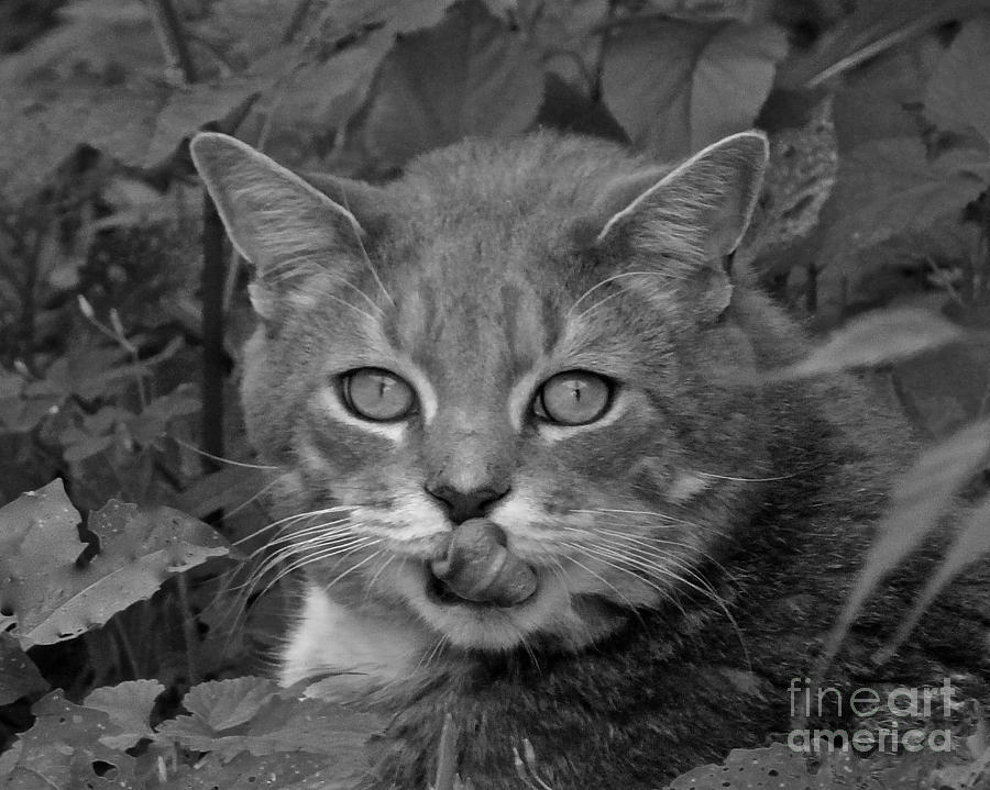 Cat Photograph - Griffin In Back And White by Jean Wright