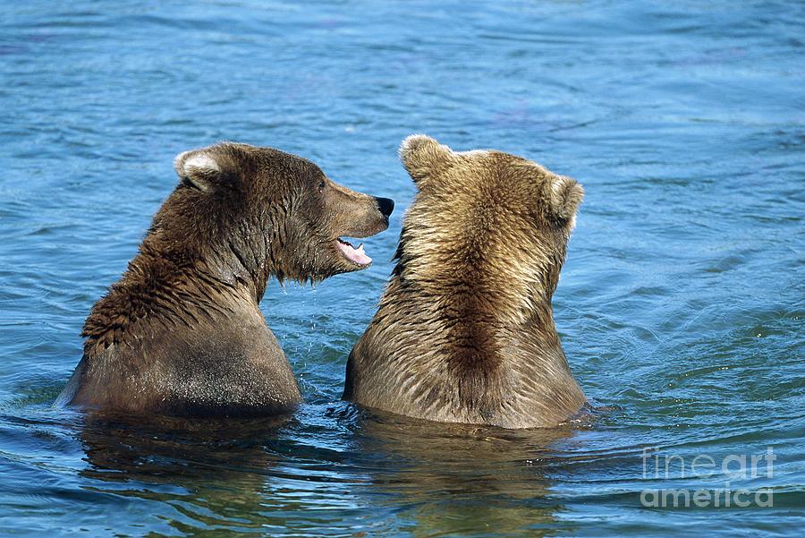 Mp Photograph - Grizzly Bear Talk by Yva Momatiuk and John Eastcott