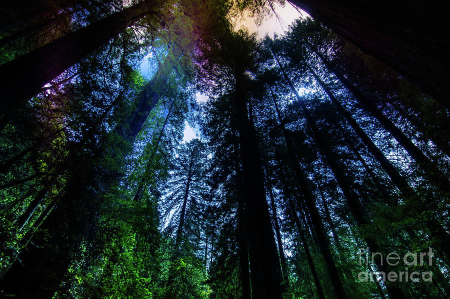 Humboldt County Photograph - Grizzly Creek Redwood Grove by Blake Webster
