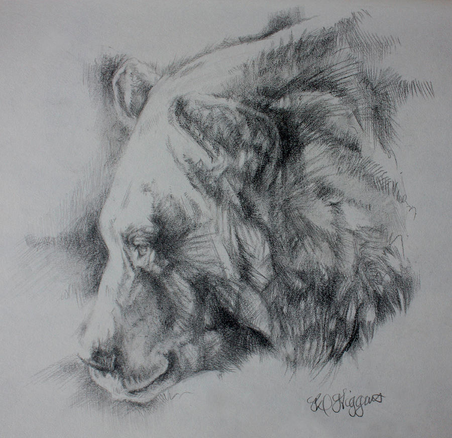 Bear Drawing - Grizzly Sketch by Derrick Higgins