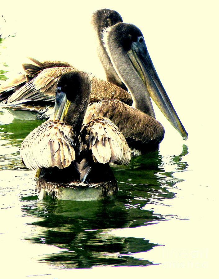 Pelicans Photograph - Grocery Shopping by Joe Jake Pratt