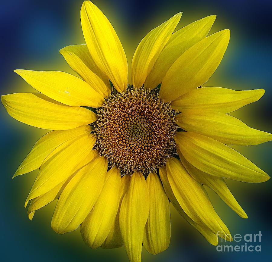 Groovy Sunflower by Jeanne Forsythe