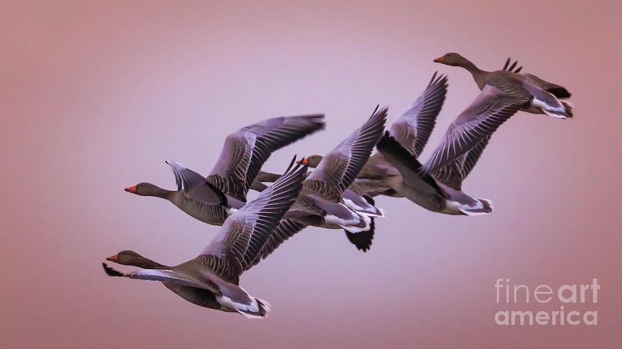 group flight  by Franziskus Pfleghart