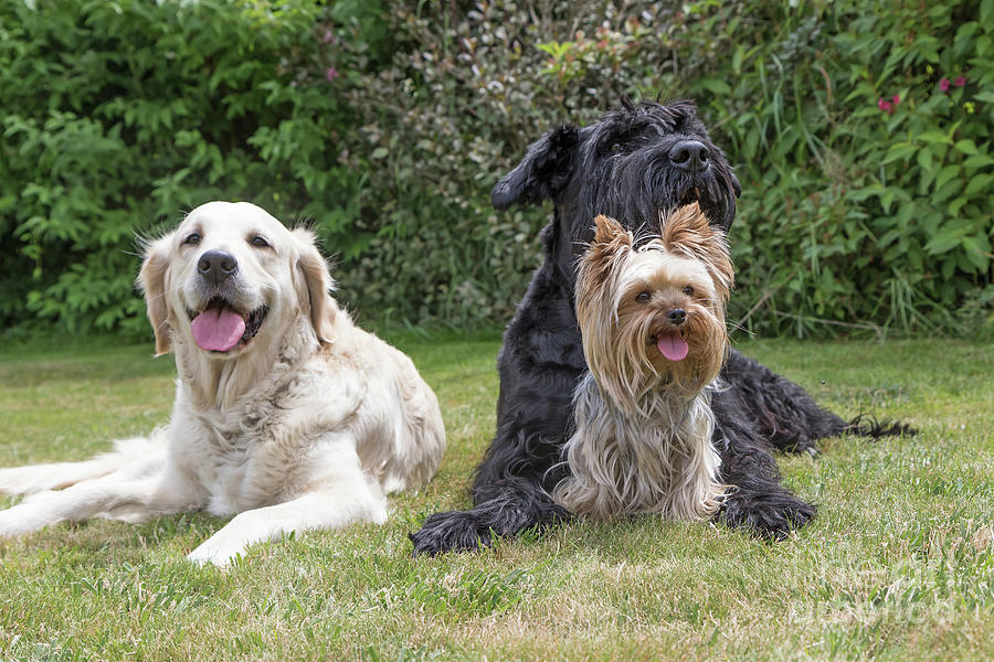 Pet Photograph - Group Of Three Dogs by Jaroslav Frank