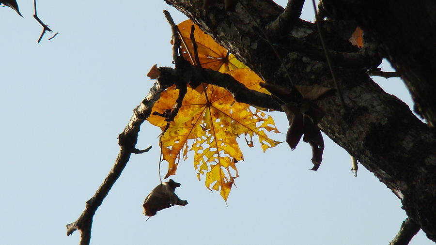 Leaves Photograph - Growing Old In The Sun by Abir Bordoloi