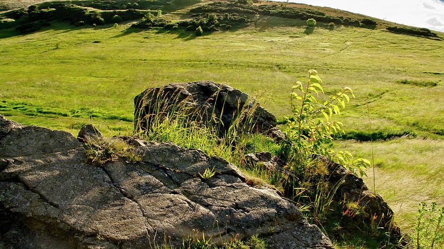 Edinburgh Photograph - Growing On Rocks. by Elena Perelman