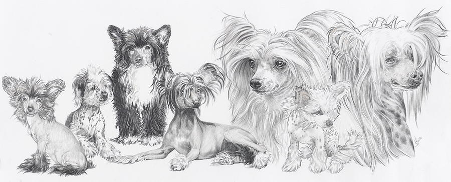 Toy Group Drawing - Growing Up Chinese Crested And Powderpuff by Barbara Keith