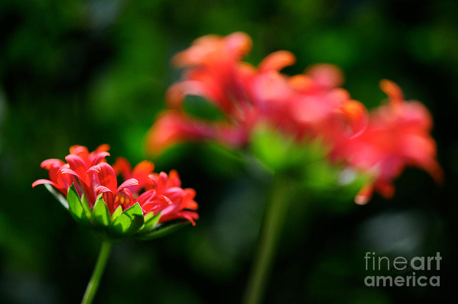 Floral Photograph - Growing Up by Lois Bryan