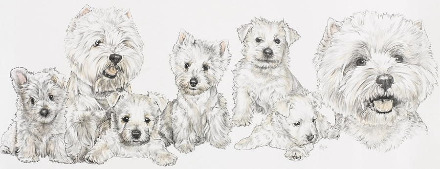 Art Drawing - Growing Up West Highland White Terrier by Barbara Keith