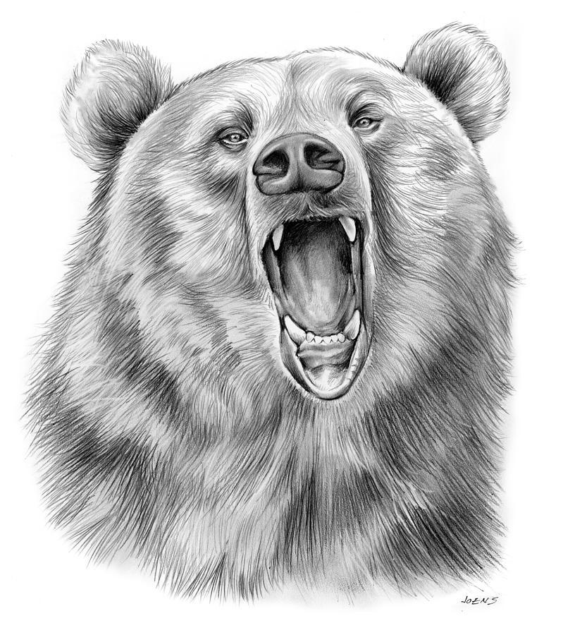 Growling Bear Drawing
