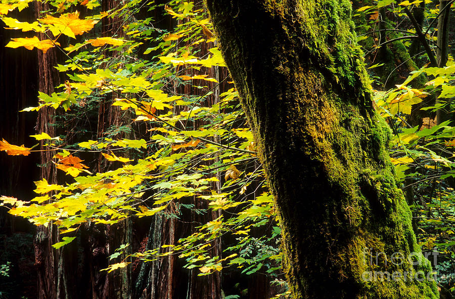 Tree Photograph - Growth by Marian Kraus