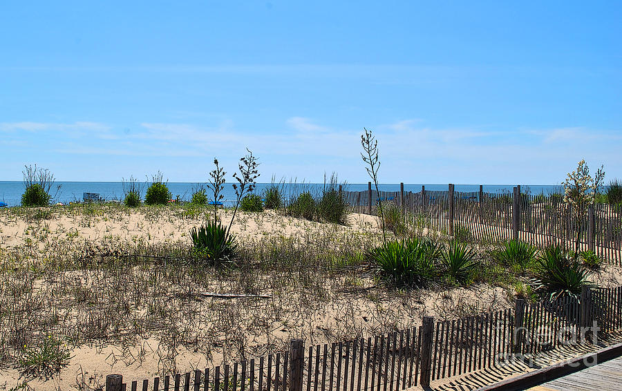 Rehoboth Photograph - Growth Of The Sea by Jost Houk