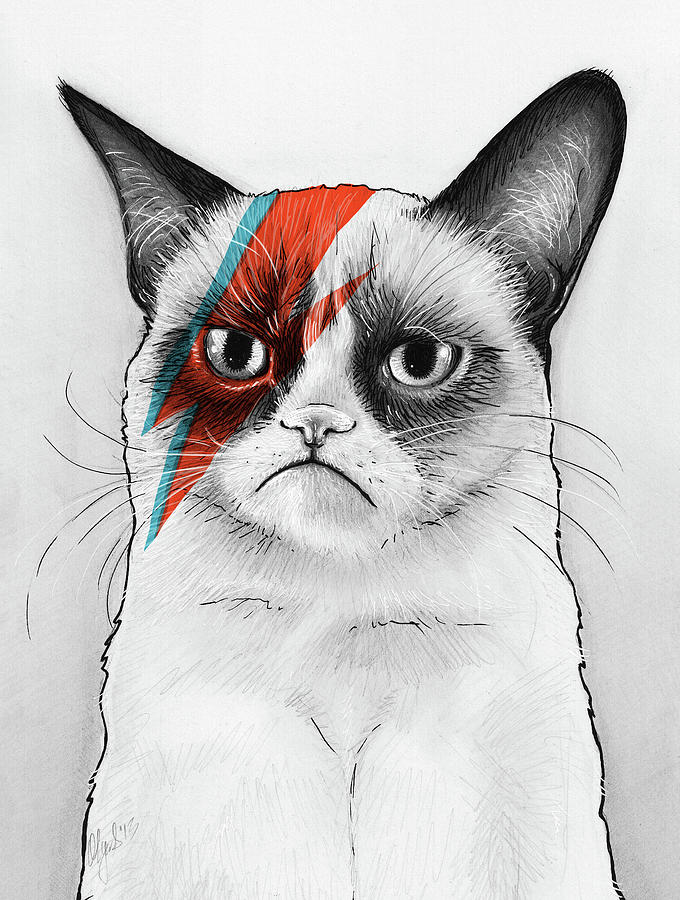 Pencil drawing grumpy cat as david bowie by olga shvartsur