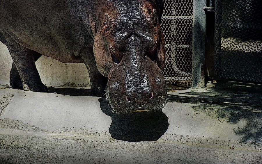 Grumpy Rhino by Maria Reverberi