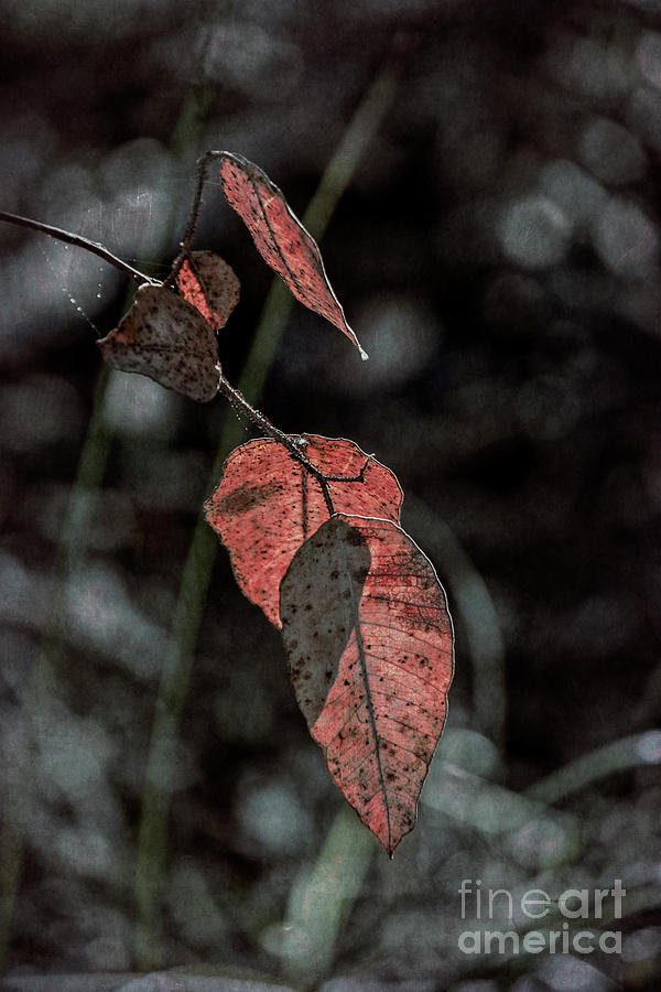 Grungy Leaves by Elaine Teague