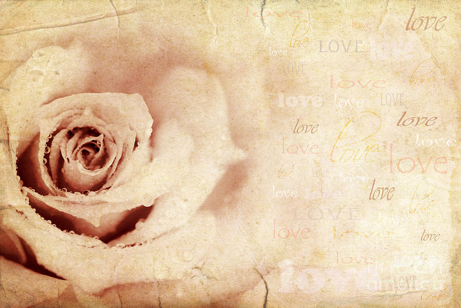 Anniversary Photograph - Grungy Rose Background by Anna Om