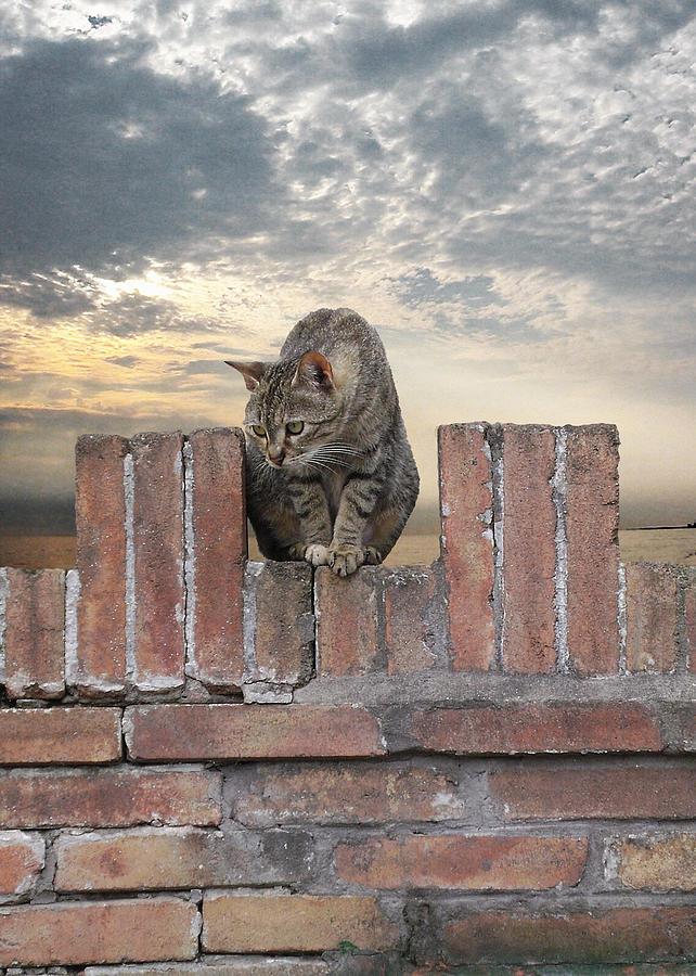 Kitty Photograph - Guarding Orvieto by Lynn Andrews