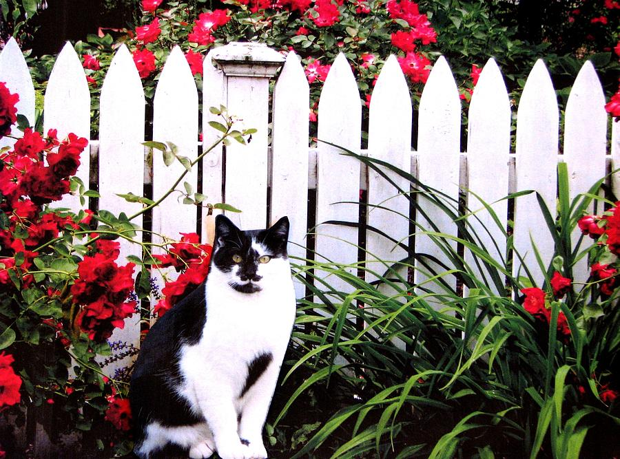 Black And White Cats Photograph - Guarding The Rose Garden by Angela Davies