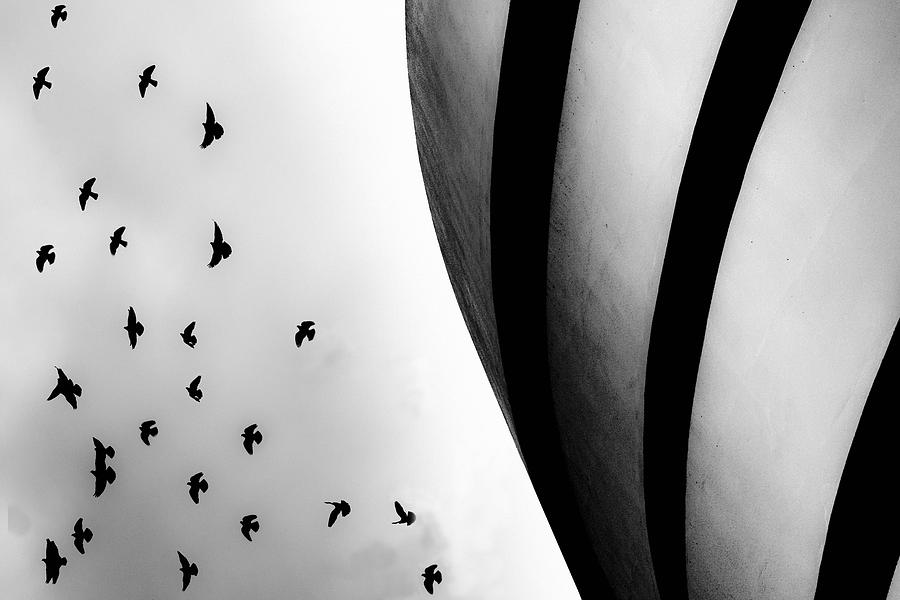 Guggenheim Museum with Pigeons by Dave Beckerman